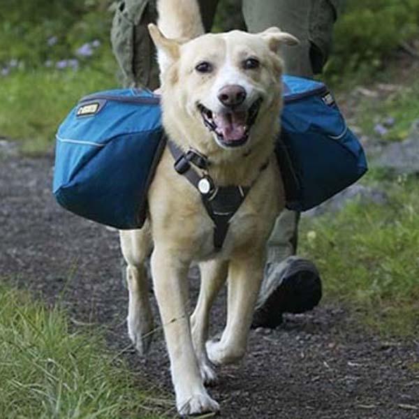 Hunde rygsæk